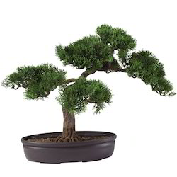 bonsai decorative silk plant