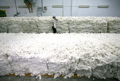 White Cotton Bale