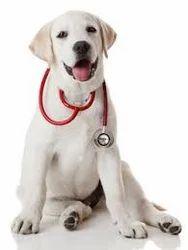 Pets Preventive Treatment