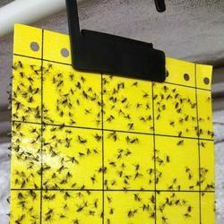 Pheromone Yellow Sticky Trap