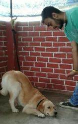 Dog Training Center Services