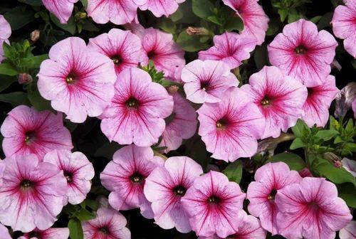Winter Season Flower