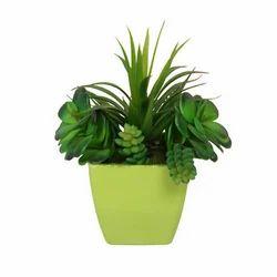 Succulent Plant (AP-21)