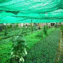 Hdpe Green Protective Agricultural Net