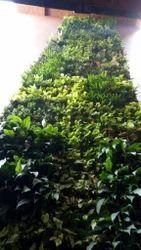 Hyperboles Artificial Vertical Gardening