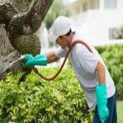 Herbal Pest Control Service