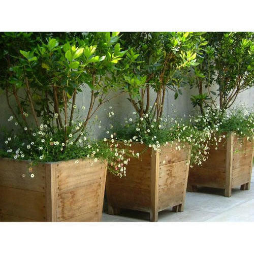 Green Outdoor Trees Manufacturer From Pune