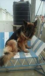 Dog Professional Training Services