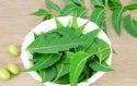 Neem Leaf Extract ( Azadirachta Indica)