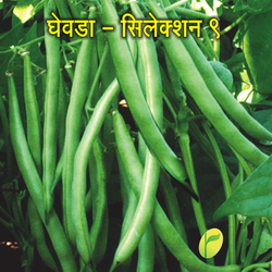 Natural Green French Bean Seed, Packaging Type: 500 Gm Pouch Packing,5 Kg Bag