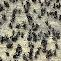 Flies Control Treatment Service