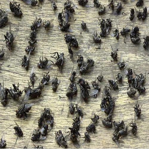 Flies Control Treatment Service