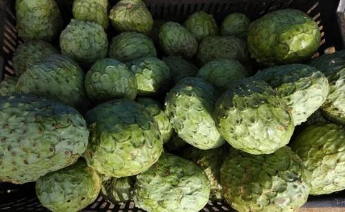 Custard Apple Pics