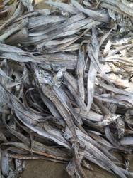 Ribbon fish dry