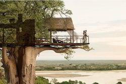 Tree House Cost Udaipur