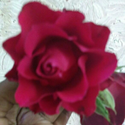 Fresh Red Rose Flower