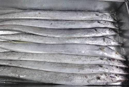 """Résultat de recherche d'images pour """"Ribbon Fish"""""""