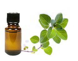 Organic Nagarmotha Oil (Cyprus Scariosus)