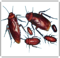 Insect Control in Jaipur, इंसेक्ट कंट्रोल, जयपुर