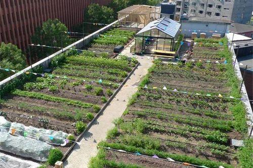 Organic farming phd thesis