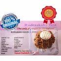 10 Mukhi Rudraksha
