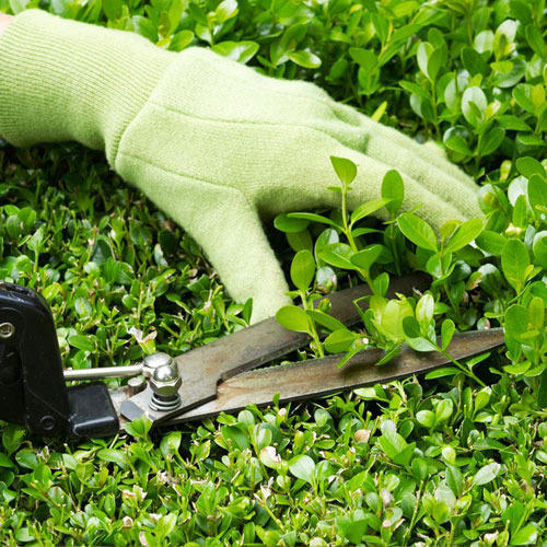 Garden Maintenance Service Wholesale Trader from Chennai