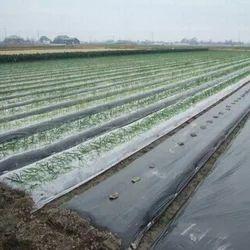 Agriculture UV Film