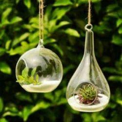Transparent Terrarium Glass Pot, Size: 5inch