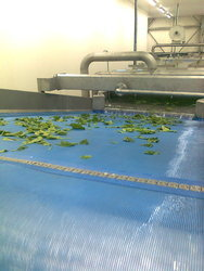 Leafy Vegetable Washer
