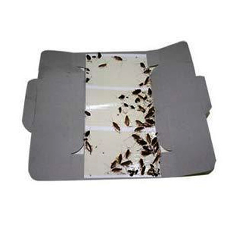Glue+Paper  Silver  Rectangular Cockroach Glue Trap, Size: 19*9 Cm