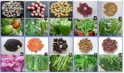 Vegetable Seeds 100 % Organic Traditional Seeds