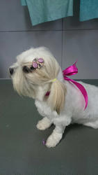 Dog Grooming And Spa Services
