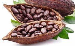 Cocoa Beans in Mumbai, कोको बीन, मुंबई, Maharashtra