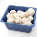 Mushroom Tray