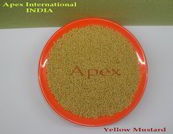 Apex Double Sortex Yellow Mustard Seed