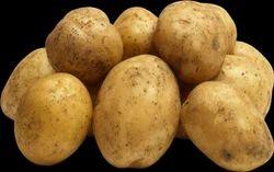 Potato, No Preservatives, Packaging: Bottled Packaging