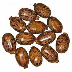 PJ Natural Castor Seeds, Packaging Type: PP Bag, Packaging Size: 25 Kg And 50 Kg