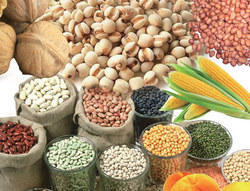 Agro Products In Mumbai Maharashtra Suppliers Dealers