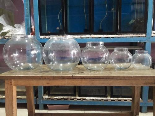 Fish Bowls , Price Rs40,60 90,100,150, Size: 4inch And 8inch