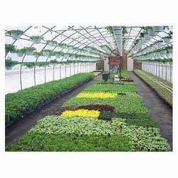 Nursery Greenhouse Services
