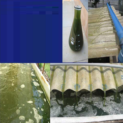 Industrial Effluents Testing Service