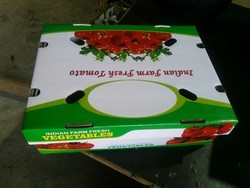 Tomato Export Packing Box