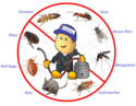 Pest Control Services In Hsr Layout