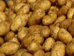 Potato, Packaging: Plastic Bag Or Polythene