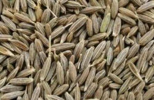 Jeera at Rs 217/kilogram | Indrani Nagar | Lucknow| ID: 16322621662