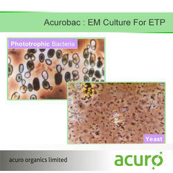 Liquid EM Culture For ETP, For Industrial
