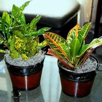 Indoor Outdoor Plant Nursery Manufacturer From Aurangabad