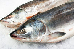 Salmon Fish Manufacturers, Suppliers & Exporters