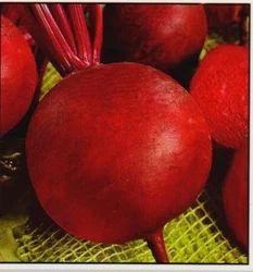 Hybrid Beet Root Vegetable Seeds