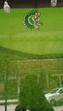 Green Color 6 Vari Saree